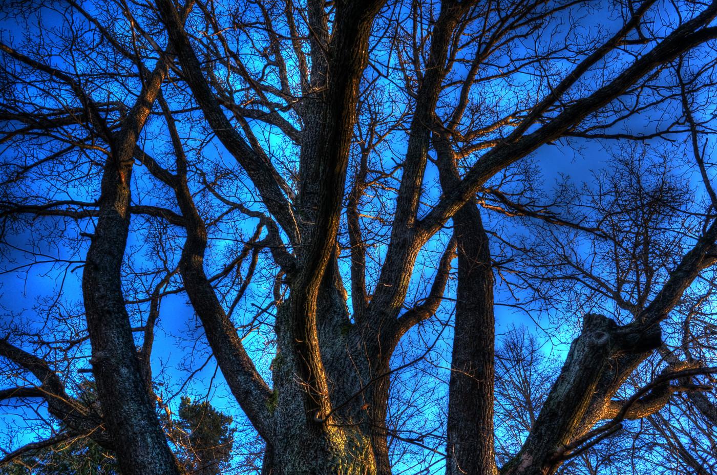 Dr. Dedichens tree HDR